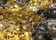 '단풍 천국' 인제·홍천에는 사이다맛 약수도 있다