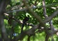 한라산 독특한 습지 '숨은물뱅듸'···멸종위기 4종 산다