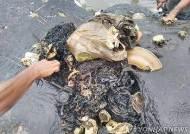 [서소문사진관]죽은 고래 배 가르니…1000여개 플라스틱 쓰레기 나와