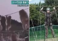[영상] 원숭이의 유격훈련?…전선타고 이동하는 日원숭이 떼