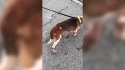 """""""개가 코피 뿜는 것 처음 봐""""···복제견 '메이' 의문의 죽음"""