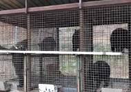 발톱 빠진 새끼 반달곰…사육곰 불법증식 알고도 구출 못 해