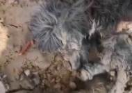 치매 걸려 진흙탕에 버려진 강아지…5일만에 구조