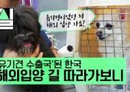 """[밀실] """"유기견 9만 마리…받아주는 이 없어 캐나다 입양갑니다"""""""