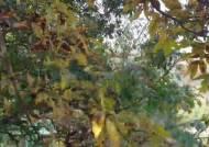 흩어지는 연기 같은 덧없는 생…낙엽을 태우며