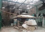 [단독]세계 최대 독수리 월동지 '파주 장단반도' 비상…ASF로 먹이 주기 중단