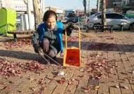 낙엽 쓸기 '공공근로' 100세 할머니