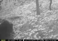 무주 삼봉산에 못보던 새끼 반달가슴곰이… 목엔 올무 흔적