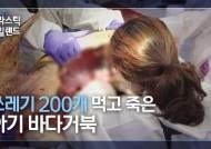 11일만에 죽었다···제주 앞바다 아기거북의 비참한 최후