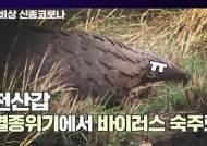 [영상]개미 먹은 죄밖에 없다···코로나 숙주 몰린 천산갑 비극