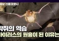 [영상]'1㎏ 만원' 똥도 귀한데···'코로나 숙주' 박쥐는 억울하다