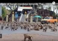 코로나 때문 관광객 줄어서?…태국서 원숭이 수백마리 '패싸움'