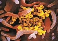 코로나19 백신 개발 20억 달러 국제경쟁…한국 제넥신도 나섰다