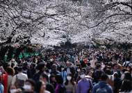 [서소문사진관] 코로나19 우려에도 도쿄는 벚꽃놀이 인파로 북적