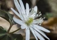 [권혁재 핸드폰사진관]폰카로 DSLR급 야생화 사진찍기, '봄 산들꽃의 꽃밭' 천마산 야생화