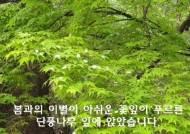 봄비 내리는 서울 안산자연공원