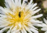 [권혁재 핸드폰사진관] 폰카로 Dslr처럼 꽃과 나비 사진찍기