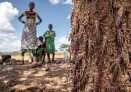 성경속 그 재앙···20배 세진 메뚜기떼, 아프리카 식량 공포