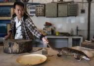 봉지에 갇힌 천산갑…중국서 야생동물 밀매가 사라지지 않는 이유
