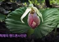 [권혁재 핸드폰사진관] '꽃 중의 꽃' 광릉요강꽃을 만나다