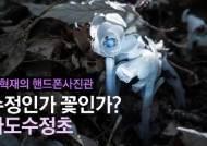[권혁재 핸드폰사진관] 수정인 듯 꽃인 듯 '나도수정초'