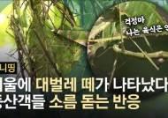 """대벌레 떼 습격에 """"으악""""···등산객 비명 울려퍼지는 서울 봉산"""