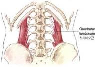 [더오래]만져주면 허리 통증 사라지게 만드는 마법의 근육