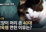 고양이 머리에 화살 3개 박고도, 40대 남성 감옥 안간 이유