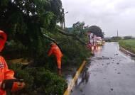 태풍 '바비' 북상에 내륙도 강풍 피해…나무 쓰러지고 해상 교량 운행 통제