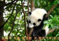 [CMG 중국통신] 세계에서 처음으로 판다가 발견된 곳 '떵츠거우'
