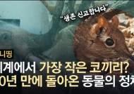 멸종된거 아니었어? 코끼리땃쥐 귀여움 뽐내며 52년만에 등장