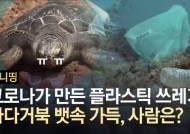 바다거북 뱃속엔 플라스틱 가득···당신도 신용카드 1장 먹는다