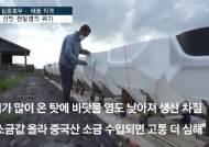 [영상] 국내최대 염전이 호수 됐다...싱거워진 신안 천일염