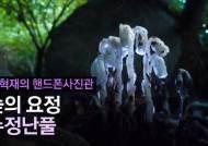 [권혁재 핸드폰사진관]숲의 요정 수정난풀