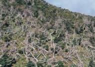 360도로 본 충격 장면, 한라산 크리스마스 나무의 죽음 [VR영상]