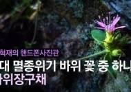 [권혁재 핸드폰사진관] 3대 멸종위기 바위 꽃 중 하나, 분홍장구채