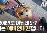 """인터넷 달군 예비 안내견 세계 """"70% 탈락, 출입 거부는 일상"""""""