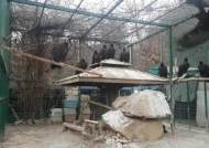 몽골서 왔는데 먹이 없어 탈진…독수리 월동지 '비상'