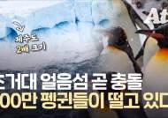 '제주 2배' 거대 빙산, 낙원 덮친다···200만 펭귄 떼죽음 위기