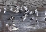 러시아서 구조한 어린 황새, 1800㎞ 날아 한반도 최남단 왔다