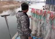 [단독]염화칼슘의 습격? 한강 하구 물고기 모조리 사라졌다
