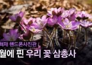 [권혁재 핸드폰사진관] 2월에 핀 우리 꽃 삼총사