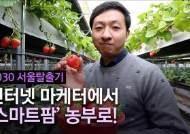 [2030 서울탈출기] ④ 32세 사장님의 딸기농장…이 시국에도 손님 3800명 비결