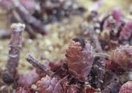 [권혁재 핸드폰사진관]영하 48도에서 살아내는 붉은점모시나비 애벌레