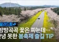 """[알려드림] """"방방곡곡 꽃은 피는데…"""" 안녕 못한 봄축제 즐길 꿀팁 [영상]"""