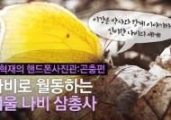 [권혁재 핸드폰사진관]나비로 월동하는 겨울 나비 삼총사