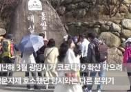 축제 취소에도 '인증샷' 인파···매화꽃 만개 광양 9만명 몰렸다