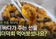 (영상)고소하고 짭짤한 봄 바다의 맛, 창원 진동 미더덕