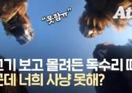 '하늘 위 청소부' 죽음…고기 200㎏, 독수리 식당 연 이유 [영상]