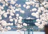 댕기머리 한복녀 따라 하회마을 구경···中서 대박난 '벚꽃 영상'